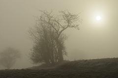 Happy Foggy Saturday