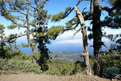 Vom Roque de los Muchachos wieder hinunter an die Nordostküste. Hier noch in Blick zur Nordküste. ©UdoSm