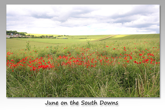 June on the South Downs near Denton - Sussex - 15.6.2015