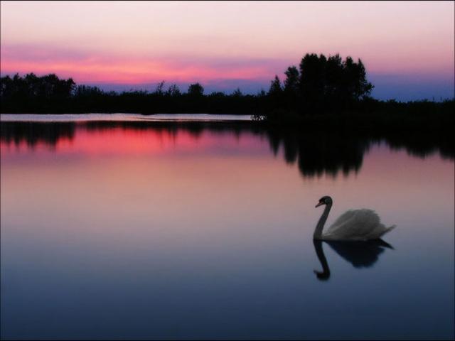 Le Lac des Cygnes, de Pyotr Ilyich Tchaïkovsky