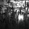 sun in the water  rain on the reeds