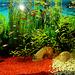 2016-02-05 01 akvario