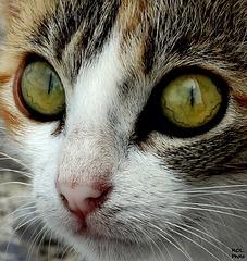 Hypnose.... tout en douceur...!