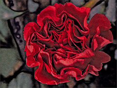 Carnation - the terrrible Red