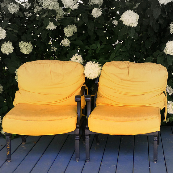 Yellow Chairs