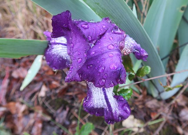 Iris 2 (Rhône, France)