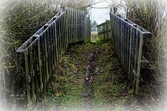 Heckenpassage - Passage through a thorn hedge - HFF