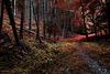 La forêt enchantée en automne , parce qu'après c'est tout gadouilleux et on s'en met plein les bottes , et surtout t'es interdit de séjour par la bourgeoise