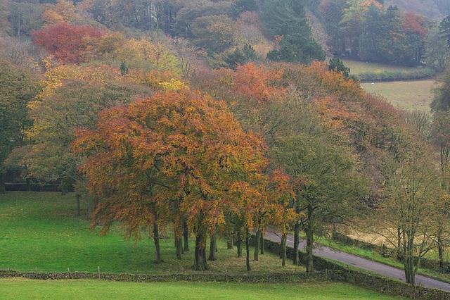 Moorfield trees