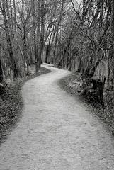 Weg im Auenwald