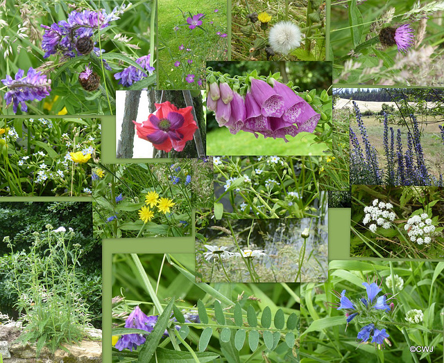 It's National Meadow Day, but you knew that already, right? Wild flowers in the pond garden.