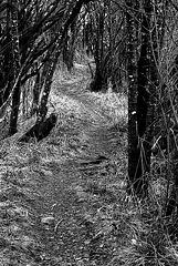 Weg durchs Unterholz