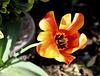 IMG 2402 Dans le parterre de fleurs de la Mairie D'Etaples