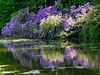 lilac flex