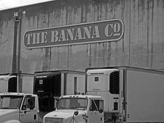 The Banana Co (6432)