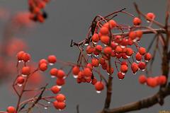 Baum vorm Fenster: Feucht, aber nicht fröhlich ...