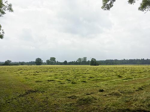 Schnaakenmoor // -feld 5485