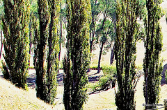 Through Tall Trees