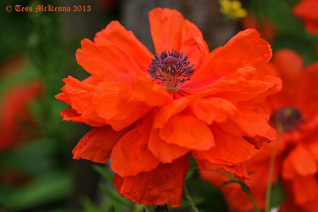 botanical gardens 8 004 copy