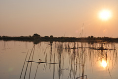 Vesperiĝo en Okavango-Delto