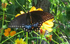 Winged Wednesday -