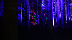 The Enchanted Forest, Faskally, 2nd Nov 2019