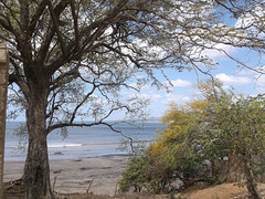 Arbres et plage /Playa y arboles