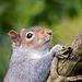 Squirrel.2jpg
