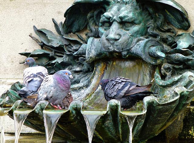 Kühler Brunnen - Cool fountain - PiP