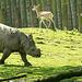 Rhino charge..