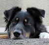 Un adorable chien de garde / An adorable watchdog