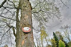 Hungrige Baum
