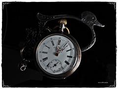 Enten-Zeit...