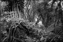 Bishops Wood.