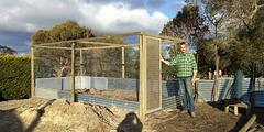 blueberry cage - work in progress