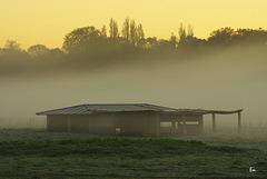 Versailles, le matin sous la brume