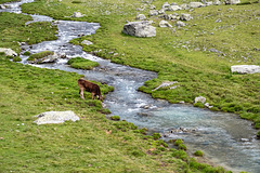 On the High Alpine Pasture