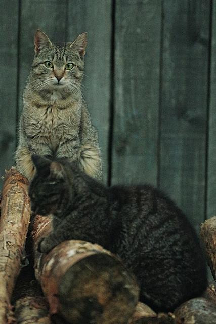 Nachts sind alle Katzen unterbelichtet.......