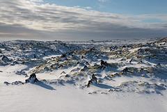 Mousse nordique en neige