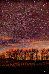 Orion above the willows