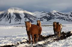 Horses in the morning sun