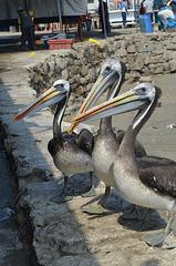 Lima, Playa Agua Dulce, Three Pelicans