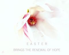 Easter Brings The Renewal Of Hope