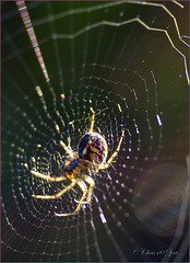 It's almost Autumn, Spiders are coming again :-)