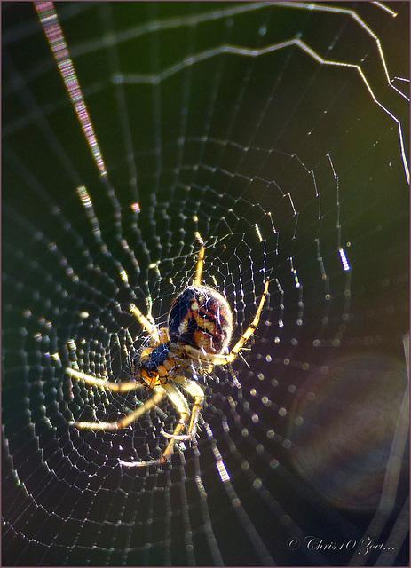 Creepy Spider...