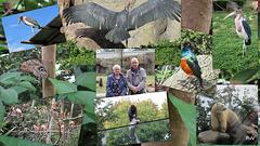 Collage van dierentuin Bllijdorp.