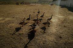 Farm Alert Brigade