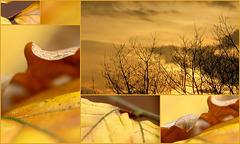 Golden Day...