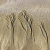 The Settlands sand trees 3