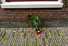 Escaped plant